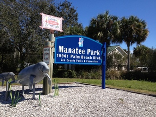 Cold snap helps researchers study manatees