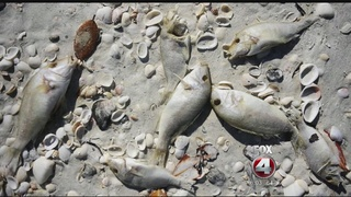 FWC: no easy solution to red tide control