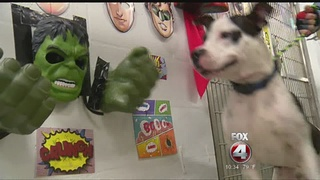 Catchy displays help pets get adopted