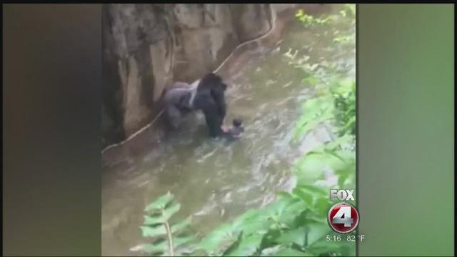 Cincinnati Zoo Reopens Gorilla Exhibit