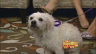 Gulf Coast Humane Society 6/24/16