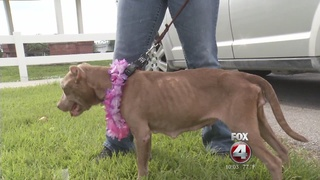 Hendry Co. responds to dog breeding concerns