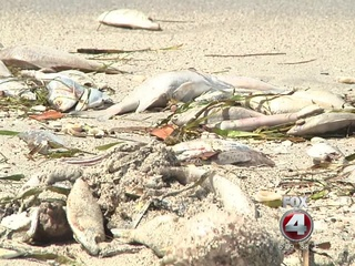 Red Tide hazard issued along SW Florida beaches
