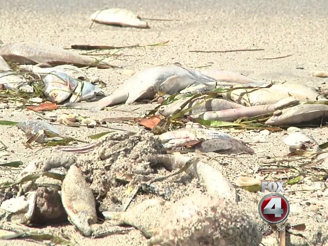 Red tide hazard issued for collier lee charlotte for Naples tides for fishing