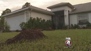 Tip leads to marijuana grow house bust