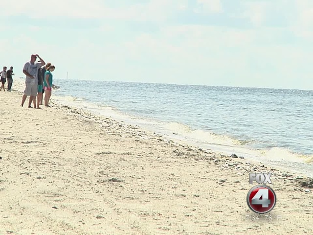 Red Tide hazard issued along SW Florida beaches - 7:30am Friday report