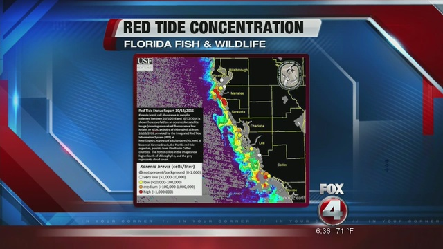 Red tide levels rise in southwest florida fox 4 now wftx for Florida fish and wildlife jobs