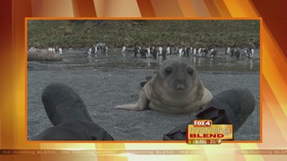 Virtual Video: Baby Seal