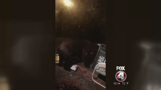 Bear caught on camera in Immokalee