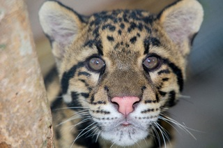 Naples Zoo sets re-opening date
