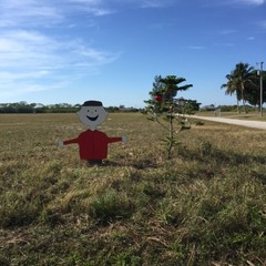 Cape Coral display pays tribute to Charlie Brown