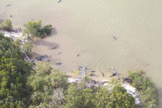 Mysterious stranding kills 81 whales in SW Fla.