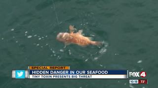 Warning for seafood lovers: Beware of toxic fish