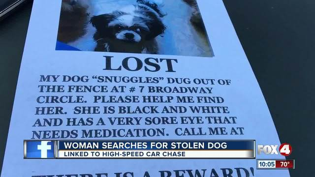 Missing dog linked to Collier high speed chase