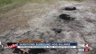 Hog carcasses rot in Tippecanoe Park