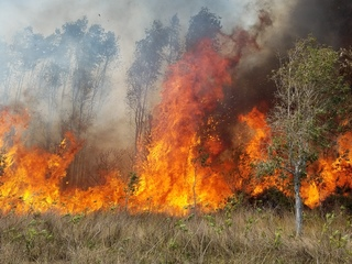 Brush fire threatens homes in Charlotte County