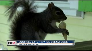 Squirrel eats tiny ice cream cones