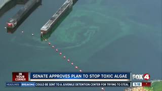 Florida Senate approves plan to stop toxic algae