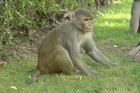 Study predicts monkey population boom in FL park