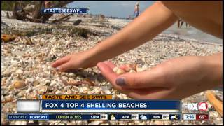 Best beaches for shelling in Southwest Florida