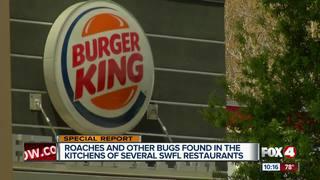 Bugs found in restaurant kitchens around SWFL