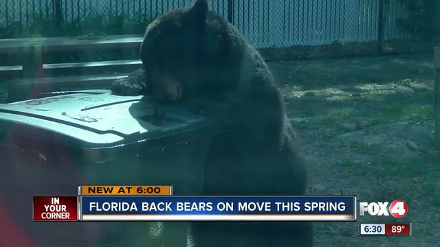 FWC: Bear-proof trash cans work; use them