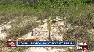 Turtle nests flooded by heavy surf in Collier