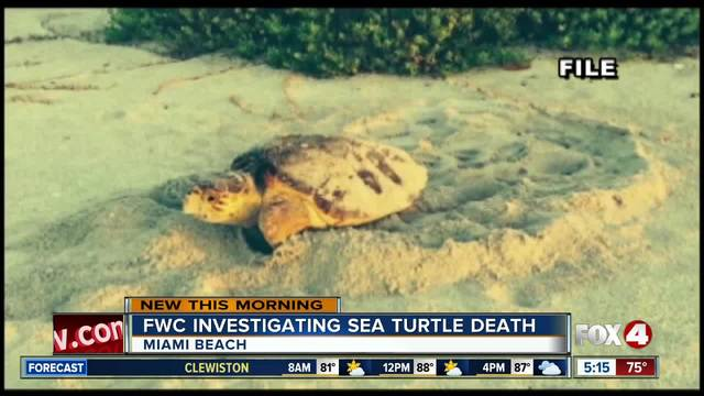 Sea turtle found dead after nesting on Florida beach