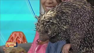 Visit Tampa Bay: Animals