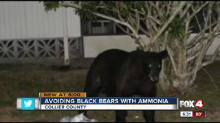 Can ammonia keep bears out of trash?