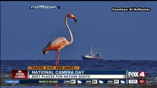 The top places in SWFL to take nature photos