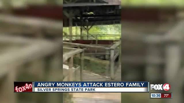 Florida family attacked by monkeys
