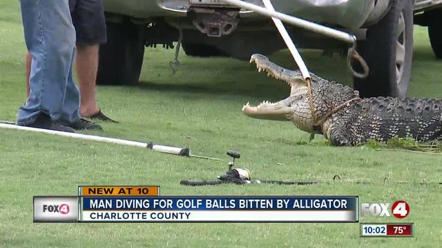 Man attacked by alligator while diving for golf balls in southwest Florida
