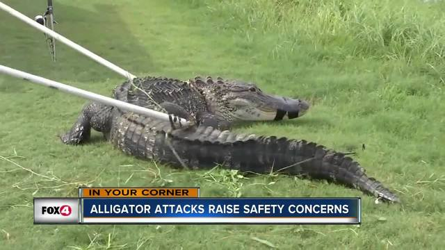 71-year-old woman hospitalized after gator bite in Southwest Florida
