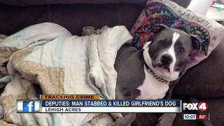 Man stabs dog for siding with girlfriend