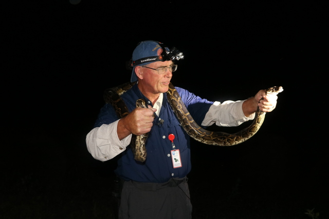 State teaching would-be trappers how to hunt pythons