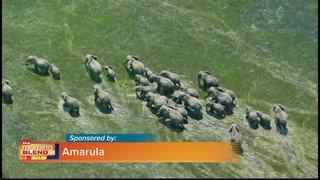 Amarula Wildlife Direct