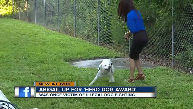 Rescue pit bull up for awards