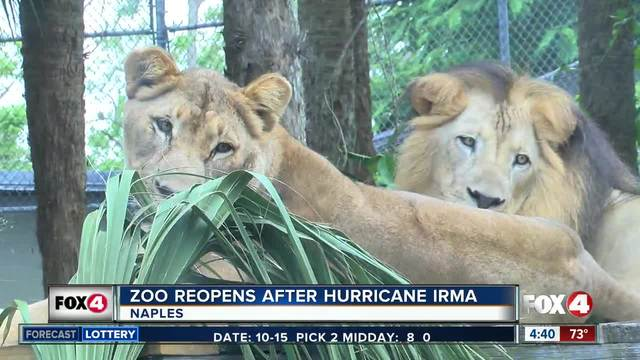 Naples Zoo reopens after Irma