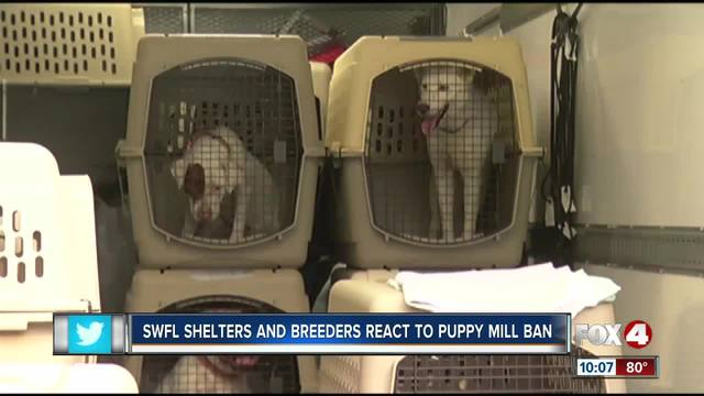 Southwest Florida activists- breeders react to CA puppy mill law