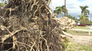 10-foot wall of Irma debris covers woman's lawn
