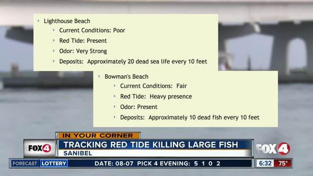 Cleanup efforts help to clear Sanibel beaches of fish kills