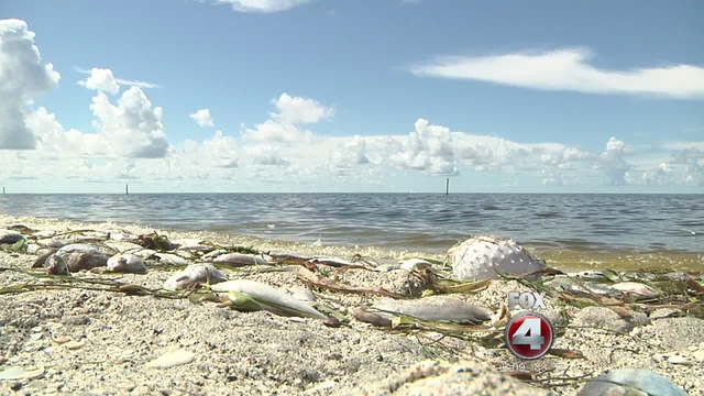 Red Tide Affecting Beaches Along Manasota Key Fox 4 Now Wftx Fort