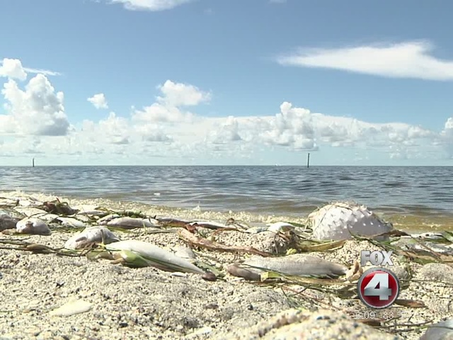 Update Englewood Fla After Thousands Of Dead Fish Swarm Along The Ss Southwest Florida Charlotte County Inmates Have Isted In Cleanup