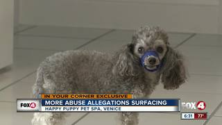 Another abuse claim towards local groomer