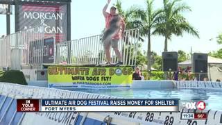 Air Dogs festival raise money for animal shelter