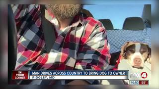 Man drives cross country to return dog