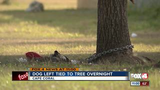 Puppy chained to tree in backyard