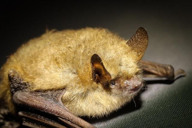 Florida Boy Dies of Rabies After Sick Bat Scratches Him