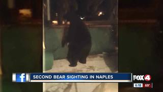 Bear sightings alarm residents in wake of attack